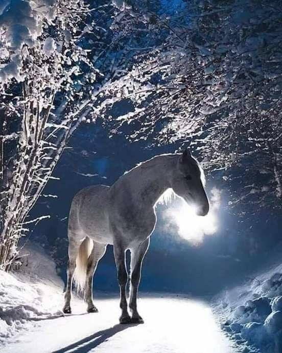 Pin By Marilyn Keeling Kovacs On Horses Are Beautiful Creatures In 2020 Horses Most Beautiful Horses Pretty Horses