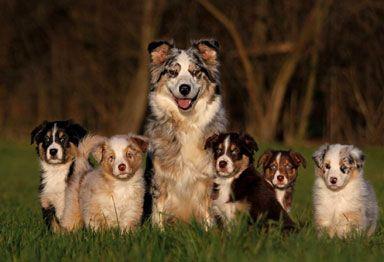 cães com filhotes - Pesquisa Google