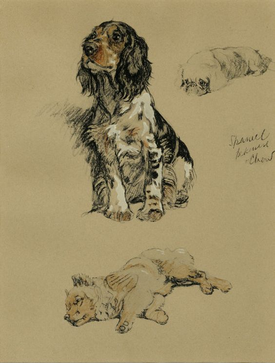 Vintage C-1934 print of a very lovely Spaniel, Pekinese, & Chow by the beloved dog artist, Cecil Aldin. Ready for display or framing, this