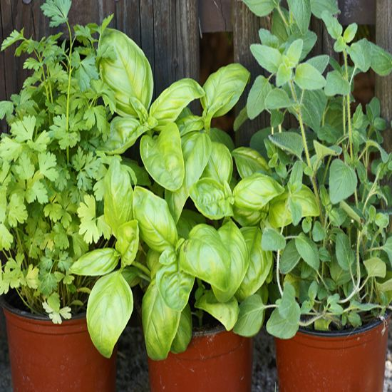 Try grandma's Fresh Herb Seasoning Recipes to season your food using herbs right out of the garden.
