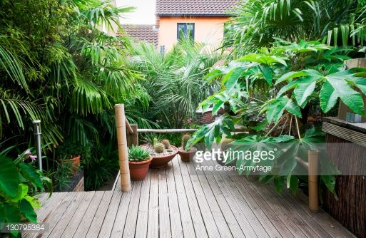 Photo : Raised Deck in Tropical Style Garden with Terracotta pots of Succulents and Tetrapanax (Tetrapanax rex), Chusan Palm (Trachycarpus fortunei), Black Bamboo (Phyllostachys nigra) and Jelly Palm (Butia capitata)