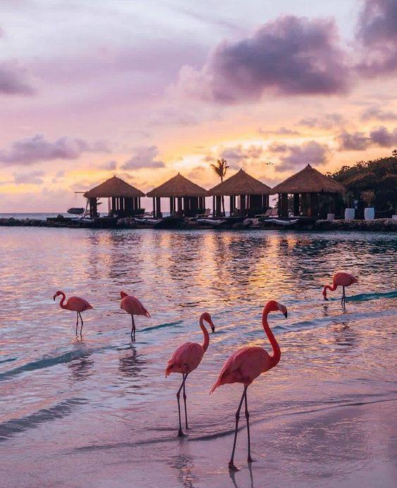 Aruba, Аруба тури відпочинок