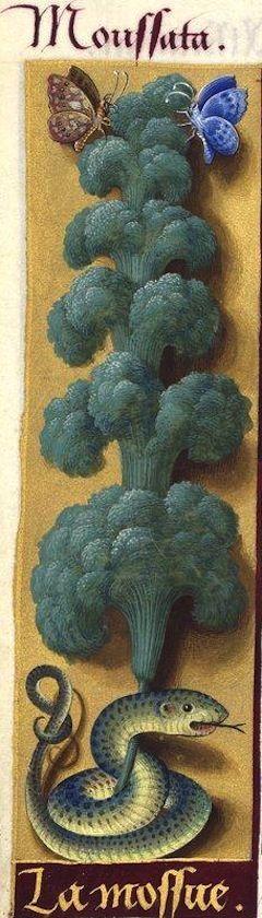 la Mossue - Moussata (Très probablement une algue, une Conferva, comme l'a fort bien vu Jussieu qui la nomme «mousse d'eau») -- Grandes Heures d'Anne de Bretagne, BNF, Ms Latin 9474, 1503-1508, f°108v