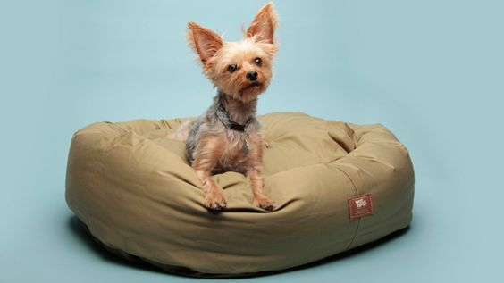 Eco-Friendly Dog Bed The dog is so cute
