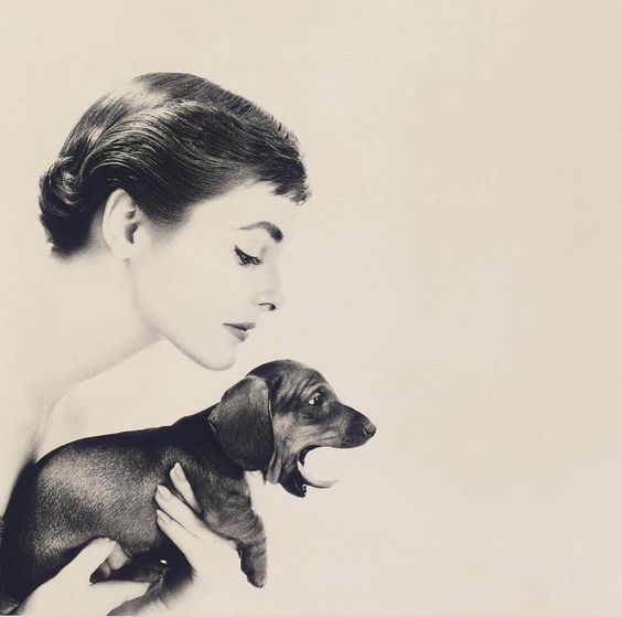Audrey and a dachshund? LOVE!!!!!!