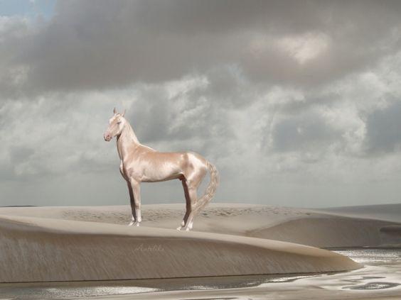Пост обожания лошадей
