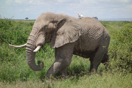 Amboseli National Park, Kenya | Amboseli National Park (Kenya part 2) | One Long Peel