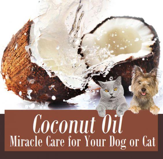 pete the cat activities for preschoolers