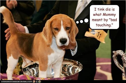 38 Funniest Memes About Dog Shows Dog Show Dogs Cute Animals