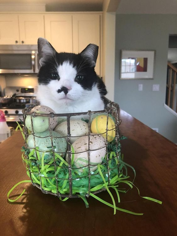 Why have an Easter Bunny when you have the Easter Kitty by carolineanneee8 cats kitten catsonweb cute adorable funny sleepy animals nature kitty cutie ca