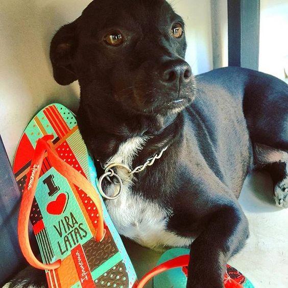 E quem não ama? #viralata #doglovers #voudeipanema