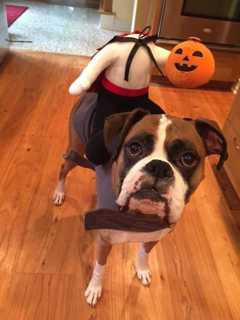 33 Pets Halloween Costumes To Flaunt Unique Halloween Style For