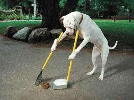 Foto di animali divertenti - Foto di un cane spazzino