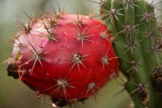 Pitaya Fruit by Miguel Angel Martinez on 500px