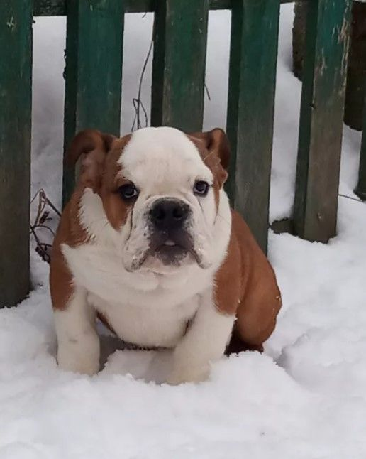 20 Unusual Boy Dog Names Boy Dog Names Dog Names Bulldog Names