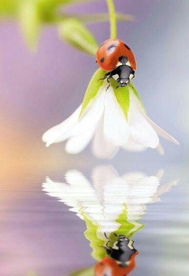la roulotte.de  fleur! - Page 2 A78949ecfb06109048ece72c6c354250