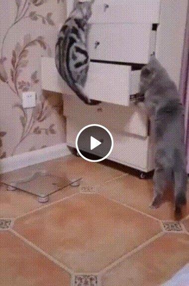 Os gatos fazendo bagunça no quarto