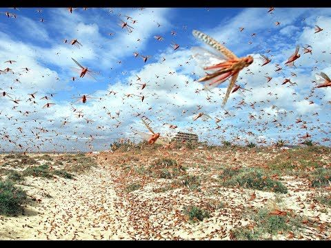 7) The Locusts from the Bottomless Pit - Revelation 9 Sign - YouTube   Locust, Waves, Art thou