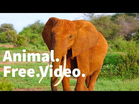 Forest Animals Video Hd