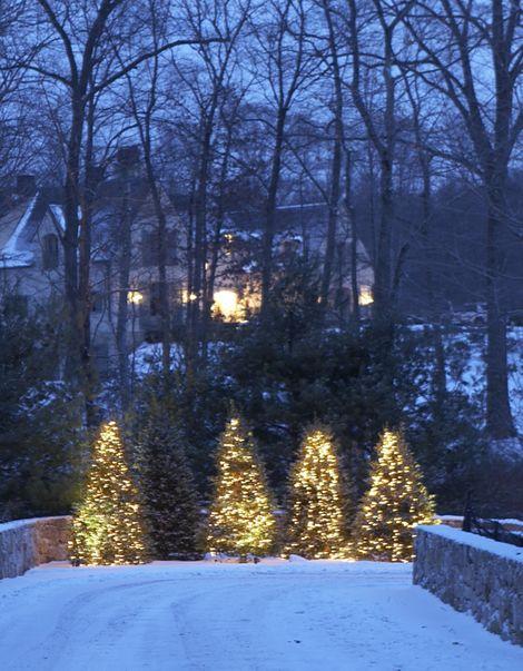 Splendid Sass: O Christmas Tree