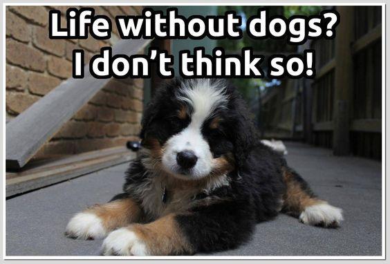 La vida sin perros? No lo imagino!