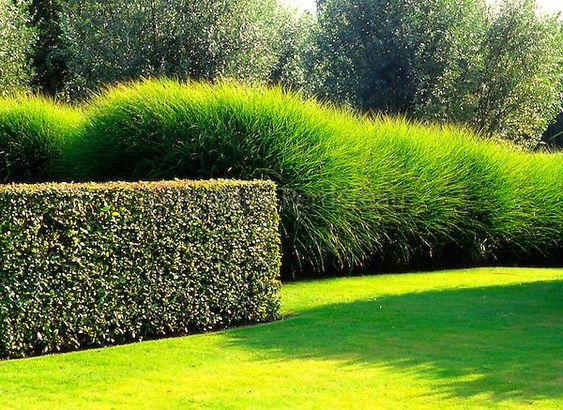 Gardens hedges and summer on pinterest for Entretien jardin 79