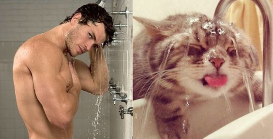 sexy men and cute cats in the same poses
