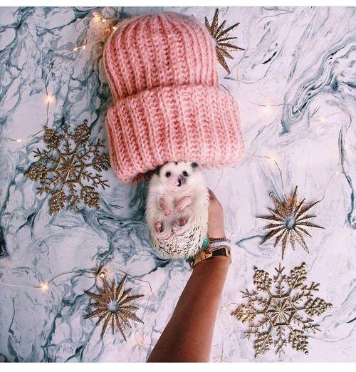 Pin By J U L I A On C U T E N E S S Cute Hamsters Fluffy Kittens Cute Animals