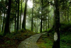 woodendreams:  (by Justin Jones)