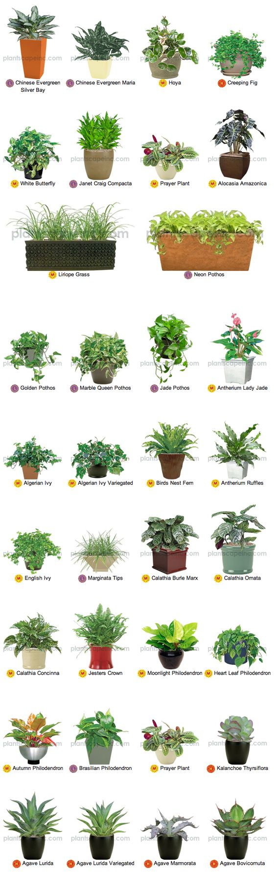 Desktop office plants by plantscape inc gardening Best small office plants