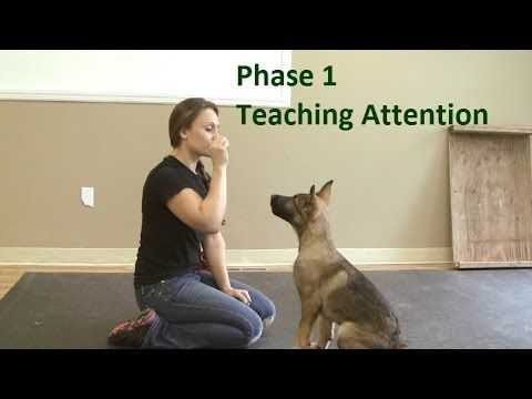 How to Train a Dog to Pay Attention (K9-1.com) - YouTube