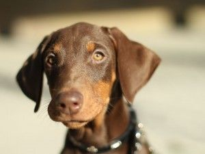 Weight Problems In Dogs: Is Your Dog Fat?