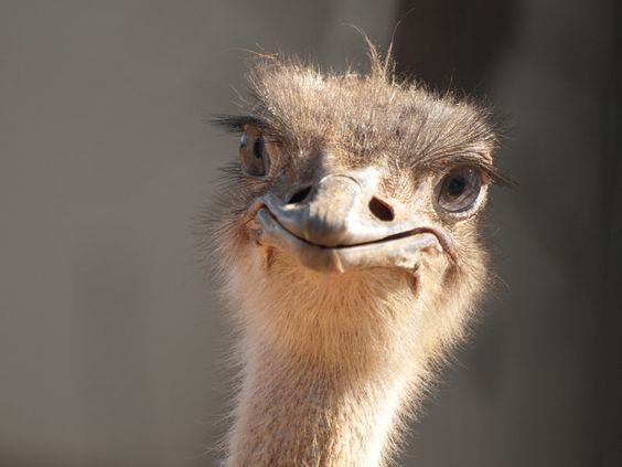 Is writing about overcoming my fear of ostriches a good college essay topic?