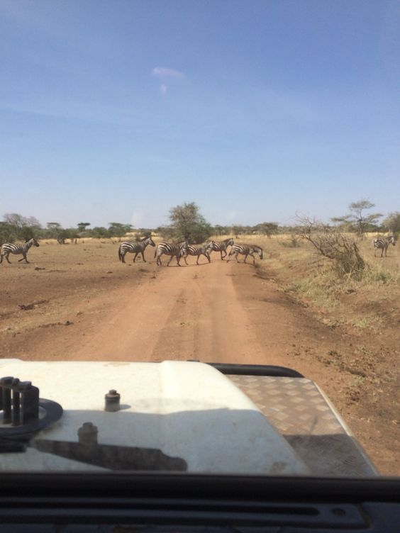 Serengeti! #Tanzania