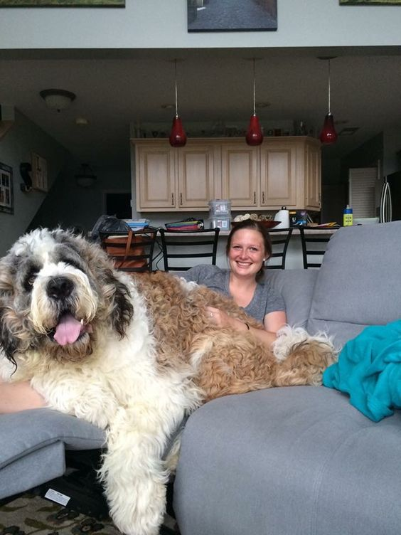 Holy huge dog!
