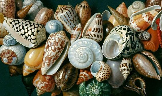 """Hard to believe this is a 17th c. painting, not a photograph. """"Festons, masques et rosettes de coquillages"""" by Jan van Kessel the Elder, 1656, Collection Frits Lugt."""