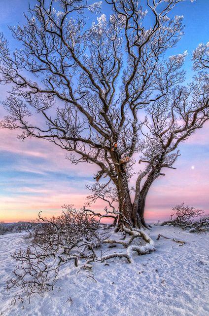 Dawn   by shylands