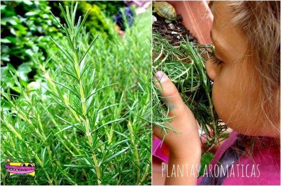 Plantas de jard n arom ticas ideas finca jard nes - Jardin de plantas aromaticas ...