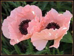Afbeeldingsresultaat voor wasbloemen
