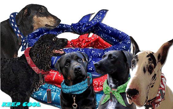 Great Dane Cooling Dog Bandanas For Great Danes Cooling Dog Collar
