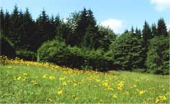 Bärenbachwiese