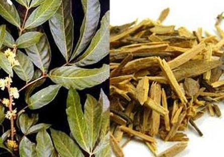 Muira Puama - Natürliche Scharfmacher  Muira Puama ist ein Baum, dessen Heimat der brasilianische Regenwald ist. Die Übersetzung des Namen bedeutet Potenzbaum, weil dessen Saft besonders aus Rinde und Wurzeln über eine potenzsteigernde Wirkung verfügt. Den einheimischen Menschen des brasilianischen Regenwaldes ist Muira Puama schon seit Jahrhunderten als medizinische Pflanze bekannt... Mehr: Facebook