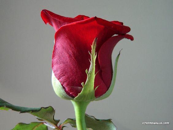 Simple beauty....