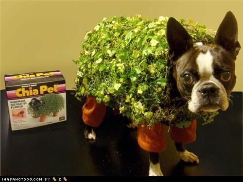 another useless chia pet (not)