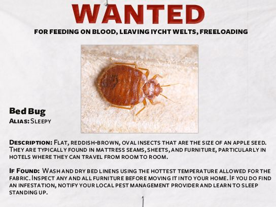 . Do It Yourself Pest Control  A Funny Guide
