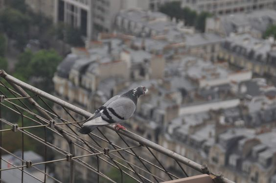 The Best Of Paris By Arrondissement – The Tourist Of Life