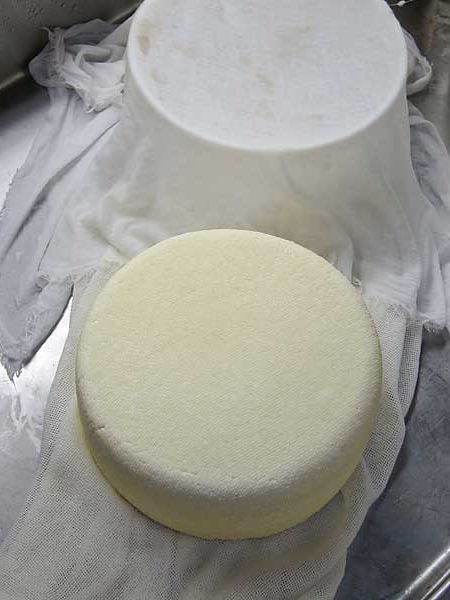 PARMA OR GRANA STYLE CHEESE USING PASTEURIZED MILK - With its long aging process of at least twelve months, digestibility and aroma, it is the ideal cheese for a healthy diet. Using an easy to find pasteurized milk from the store we will show you how to make a smaller early aging cheese at home in your kitchen.