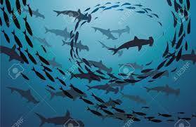 Resultado de imagen para los tiburones