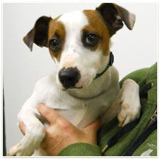 Kosmo, located at the A.N.N.A Shelter in Erie, Pa wants a home.