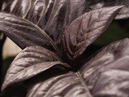 Way Hots: Tropical Houseplants Garden Design Calimesa, CA